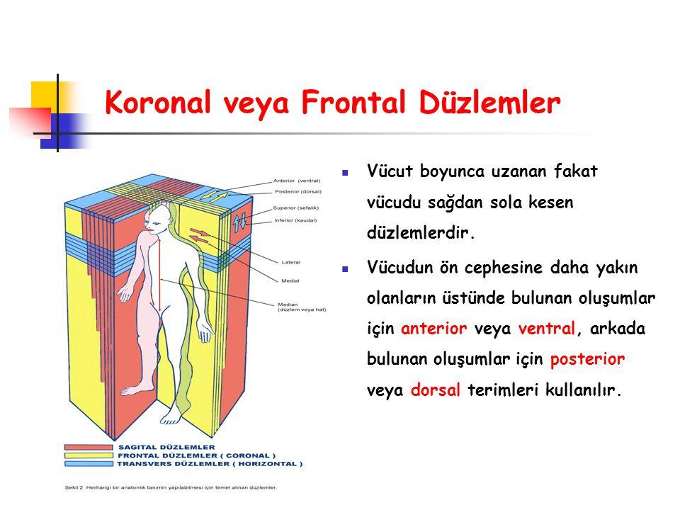 Koronal veya Frontal Düzlemler Vücut boyunca uzanan fakat vücudu sağdan sola kesen düzlemlerdir. Vücudun ön cephesine daha yakın olanların üstünde bul