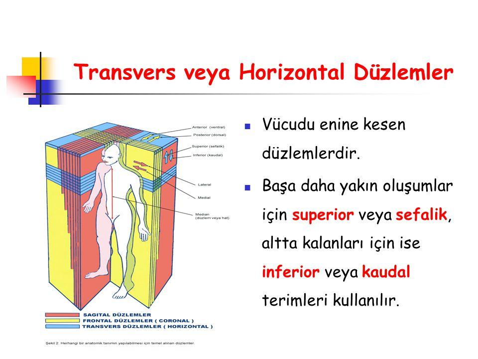 Transvers veya Horizontal Düzlemler Vücudu enine kesen düzlemlerdir. Başa daha yakın oluşumlar için superior veya sefalik, altta kalanları için ise in