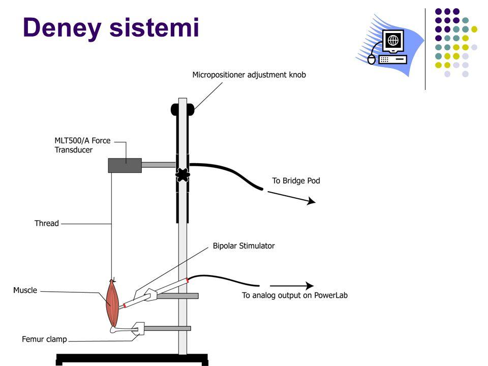 Deney sistemi