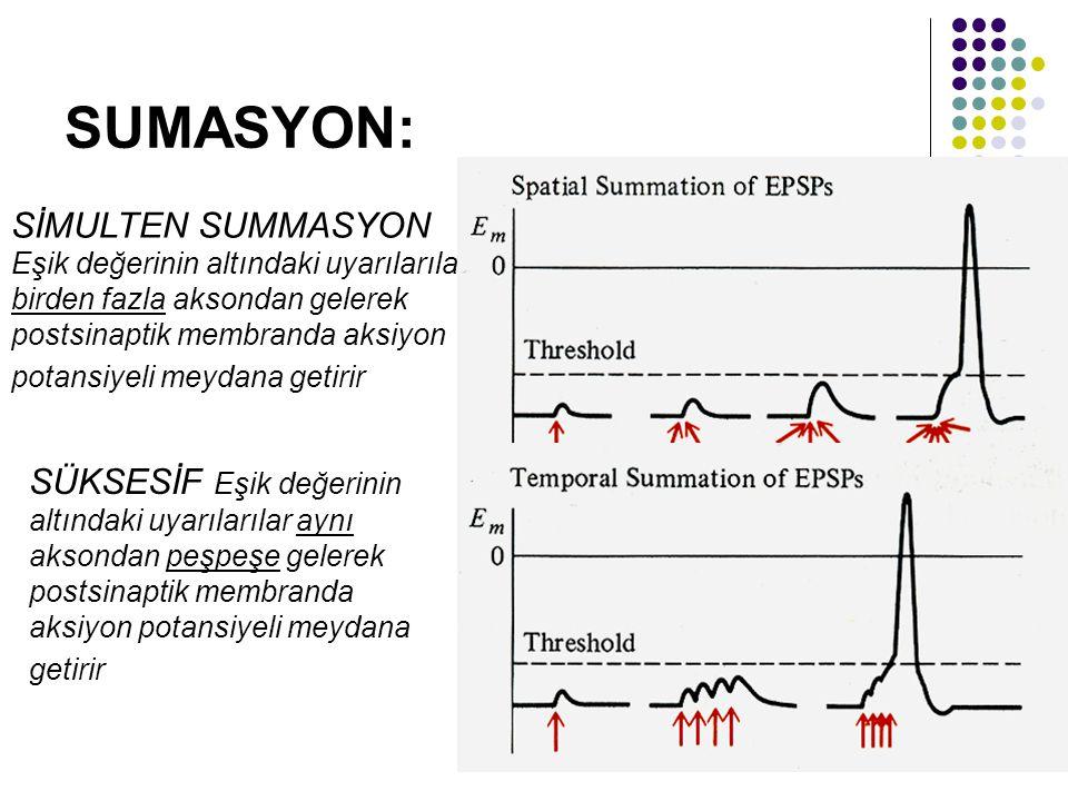 SUMASYON: SİMULTEN SUMMASYON Eşik değerinin altındaki uyarılarılar birden fazla aksondan gelerek postsinaptik membranda aksiyon potansiyeli meydana ge