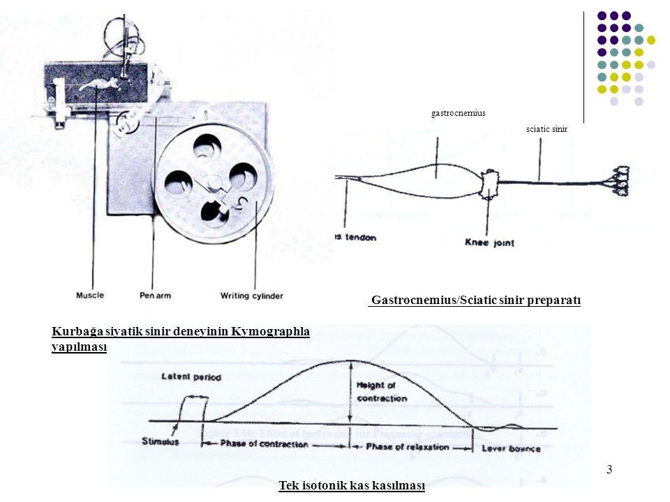 3 Kurbağa siyatik sinir deneyinin Kymographla yapılması Gastrocnemius/Sciatic sinir preparatı Tek isotonik kas kasılması gastrocnemius sciatic sinir