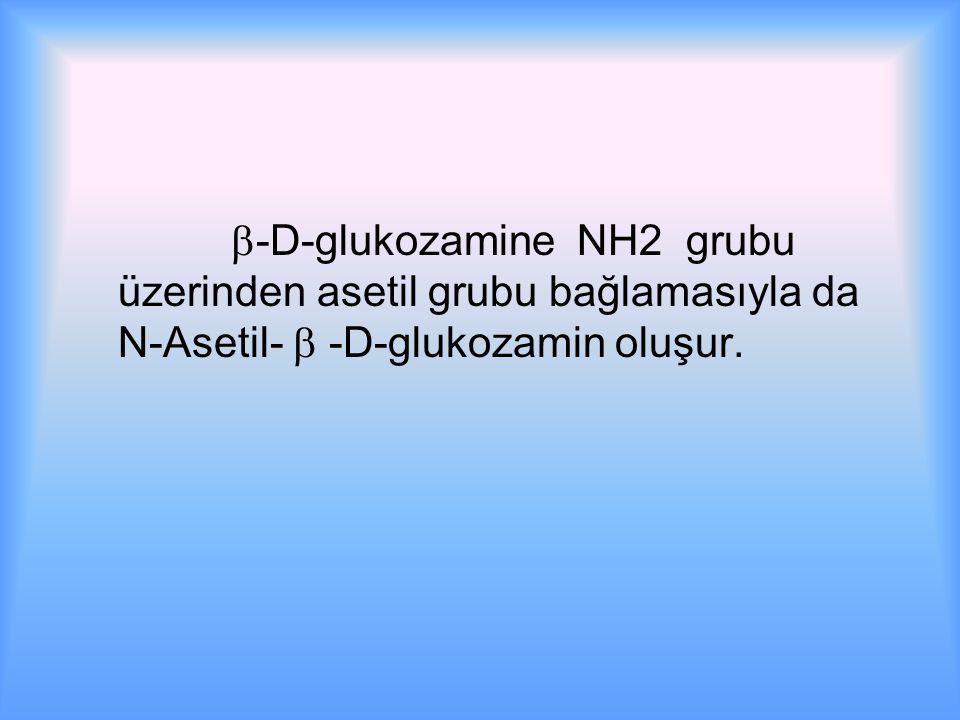  -D-glukozamine NH2 grubu üzerinden asetil grubu bağlamasıyla da N-Asetil-  -D-glukozamin oluşur.