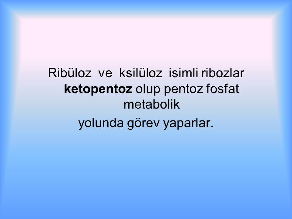 Ribüloz ve ksilüloz isimli ribozlar ketopentoz olup pentoz fosfat metabolik yolunda görev yaparlar.