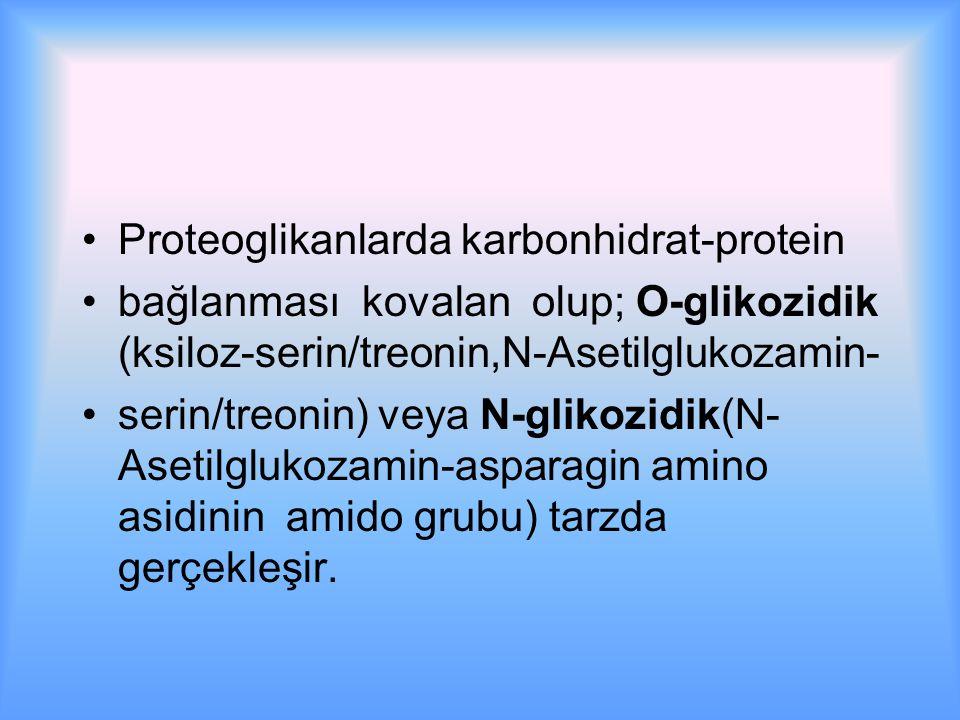 Proteoglikanlarda karbonhidrat-protein bağlanması kovalan olup; O-glikozidik (ksiloz-serin/treonin,N-Asetilglukozamin- serin/treonin) veya N-glikozidik(N- Asetilglukozamin-asparagin amino asidinin amido grubu) tarzda gerçekleşir.