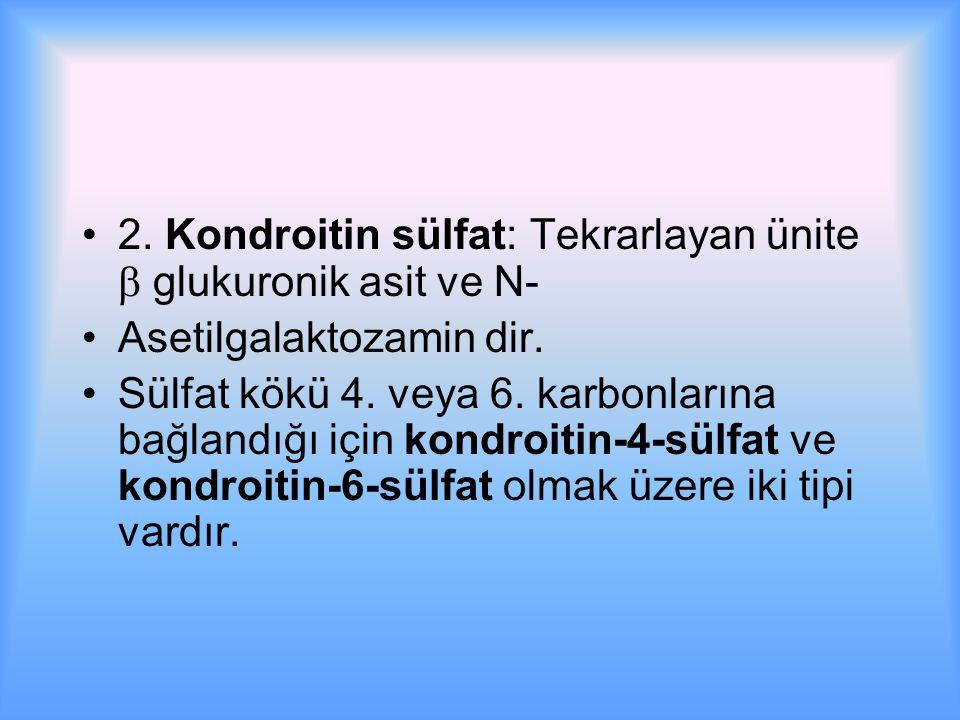 2.Kondroitin sülfat: Tekrarlayan ünite  glukuronik asit ve N- Asetilgalaktozamin dir.