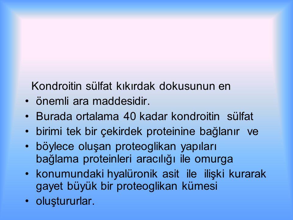 Kondroitin sülfat kıkırdak dokusunun en önemli ara maddesidir.