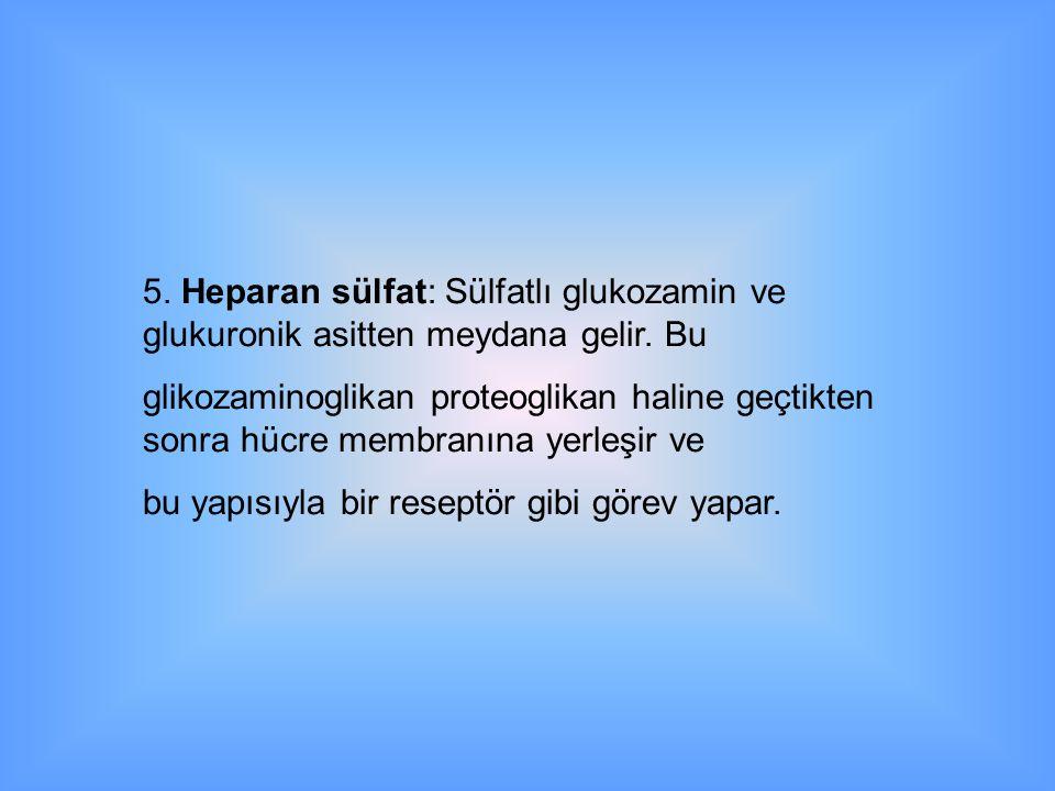 5.Heparan sülfat: Sülfatlı glukozamin ve glukuronik asitten meydana gelir.