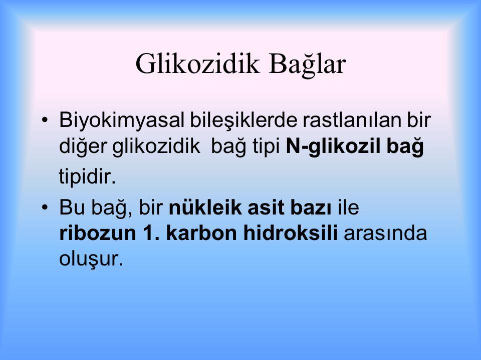 Glikozidik Bağlar Biyokimyasal bileşiklerde rastlanılan bir diğer glikozidik bağ tipi N-glikozil bağ tipidir.