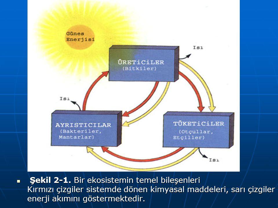 Şekil 2-1. Bir ekosistemin temel bileşenleri Kırmızı çizgiler sistemde dönen kimyasal maddeleri, sarı çizgiler enerji akımını göstermektedir. Şekil 2-