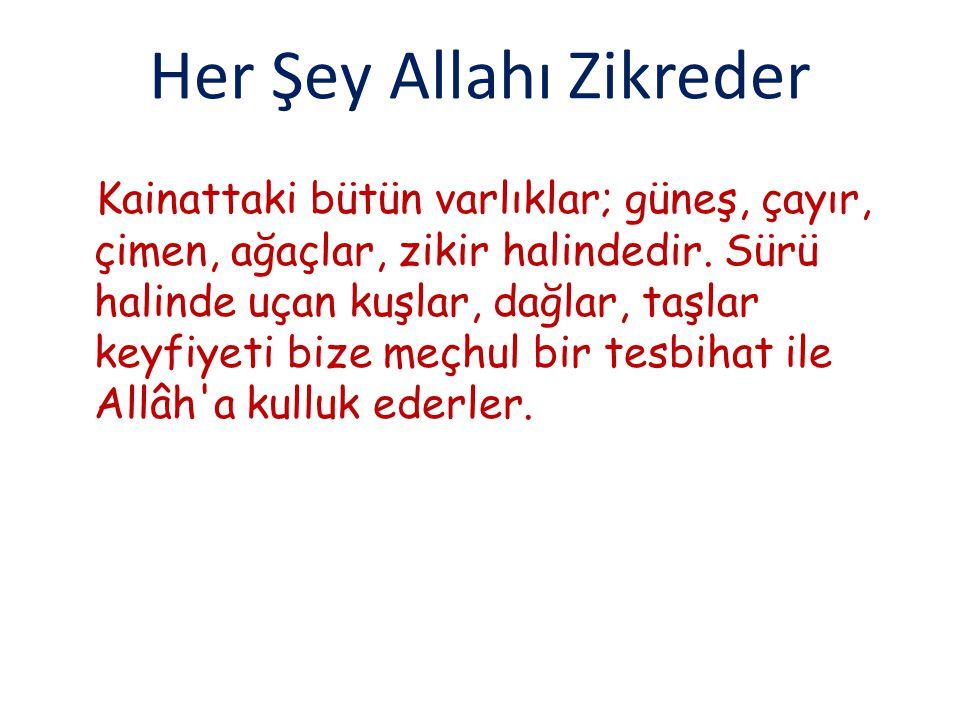 Her Şey Allahı Zikreder Kainattaki bütün varlıklar; güneş, çayır, çimen, ağaçlar, zikir halindedir.