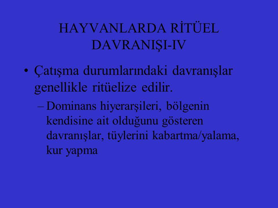 HAYVANLARDA RİTÜEL DAVRANIŞI-IV Çatışma durumlarındaki davranışlar genellikle ritüelize edilir. –Dominans hiyerarşileri, bölgenin kendisine ait olduğu