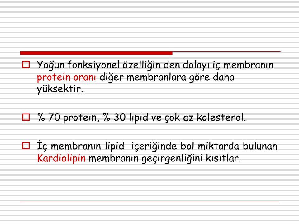  Yoğun fonksiyonel özelliğin den dolayı iç membranın protein oranı diğer membranlara göre daha yüksektir.  % 70 protein, % 30 lipid ve çok az kolest