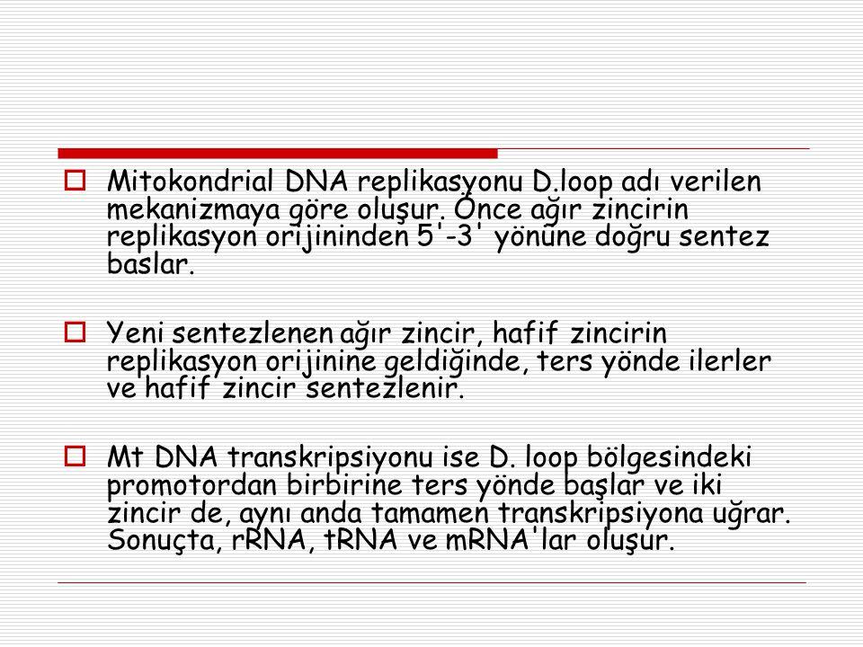  Mitokondrial DNA replikasyonu D.loop adı verilen mekanizmaya göre oluşur. Önce ağır zincirin replikasyon orijininden 5'-3' yönüne doğru sentez basla