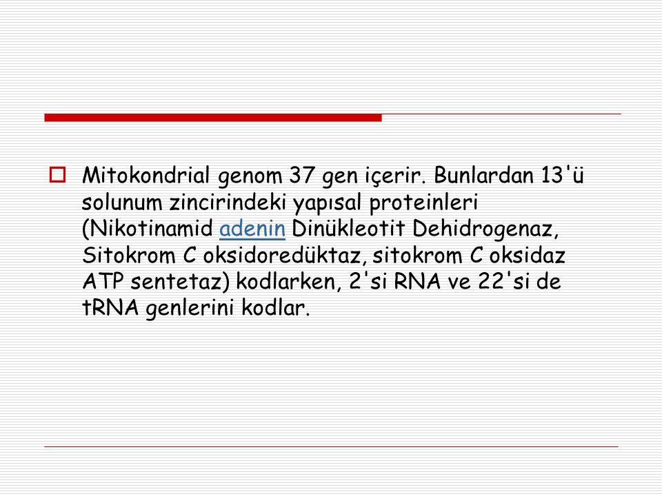  Mitokondrial genom 37 gen içerir. Bunlardan 13'ü solunum zincirindeki yapısal proteinleri (Nikotinamid adenin Dinükleotit Dehidrogenaz, Sitokrom C o