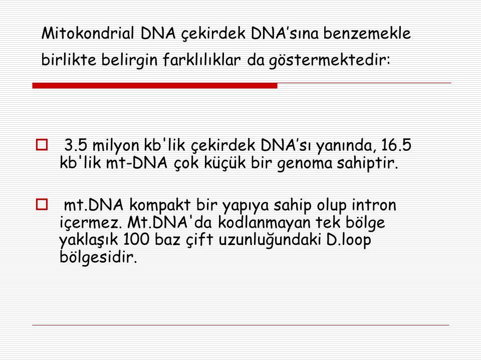 Mitokondrial DNA çekirdek DNA'sına benzemekle birlikte belirgin farklılıklar da göstermektedir:  3.5 milyon kb'lik çekirdek DNA'sı yanında, 16.5 kb'l