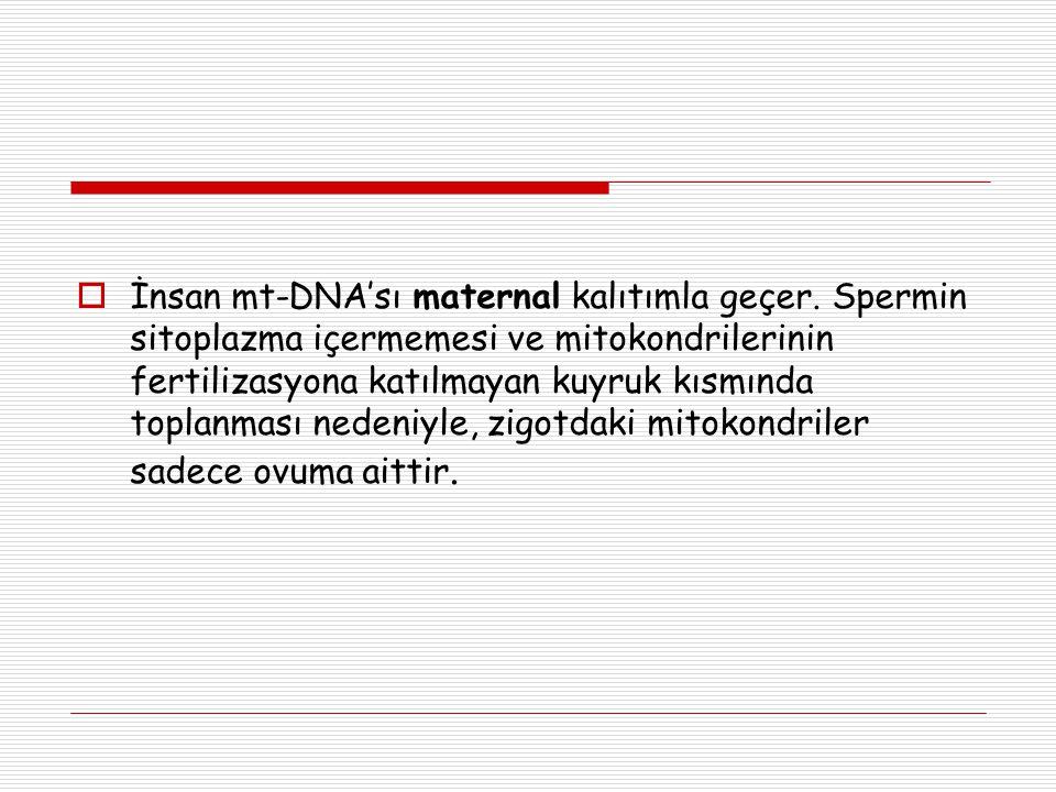 İnsan mt-DNA'sı maternal kalıtımla geçer. Spermin sitoplazma içermemesi ve mitokondrilerinin fertilizasyona katılmayan kuyruk kısmında toplanması ne