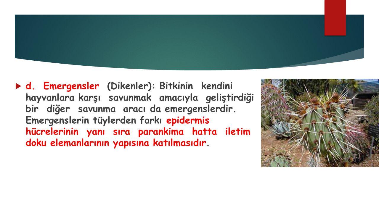 d. Emergensler (Dikenler): Bitkinin kendini hayvanlara karşı savunmak amacıyla geliştirdiği bir diğer savunma aracı da emergenslerdir. Emergenslerin