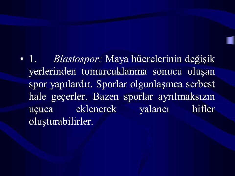 1. Blastospor: Maya hücrelerinin değişik yerlerinden tomurcuklanma sonucu oluşan spor yapılardır. Sporlar olgunlaşınca serbest hale geçerler. Bazen sp