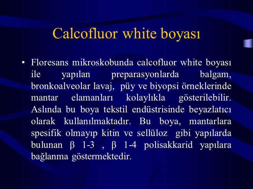Calcofluor white boyası Floresans mikroskobunda calcofluor white boyası ile yapılan preparasyonlarda balgam, bronkoalveolar lavaj, püy ve biyopsi örneklerinde mantar elamanları kolaylıkla gösterilebilir.