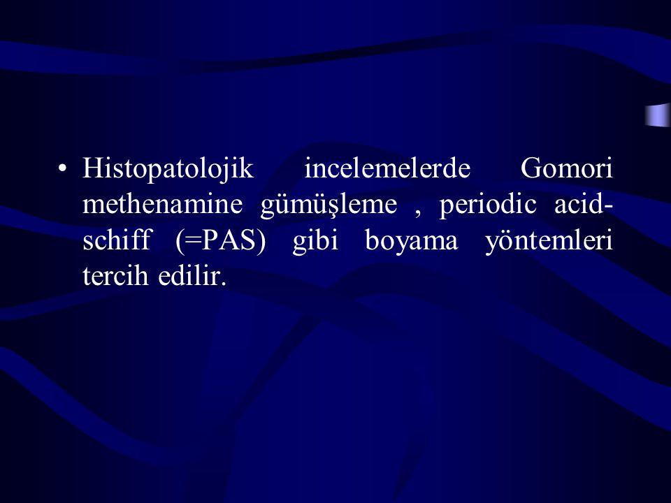 Histopatolojik incelemelerde Gomori methenamine gümüşleme, periodic acid- schiff (=PAS) gibi boyama yöntemleri tercih edilir.