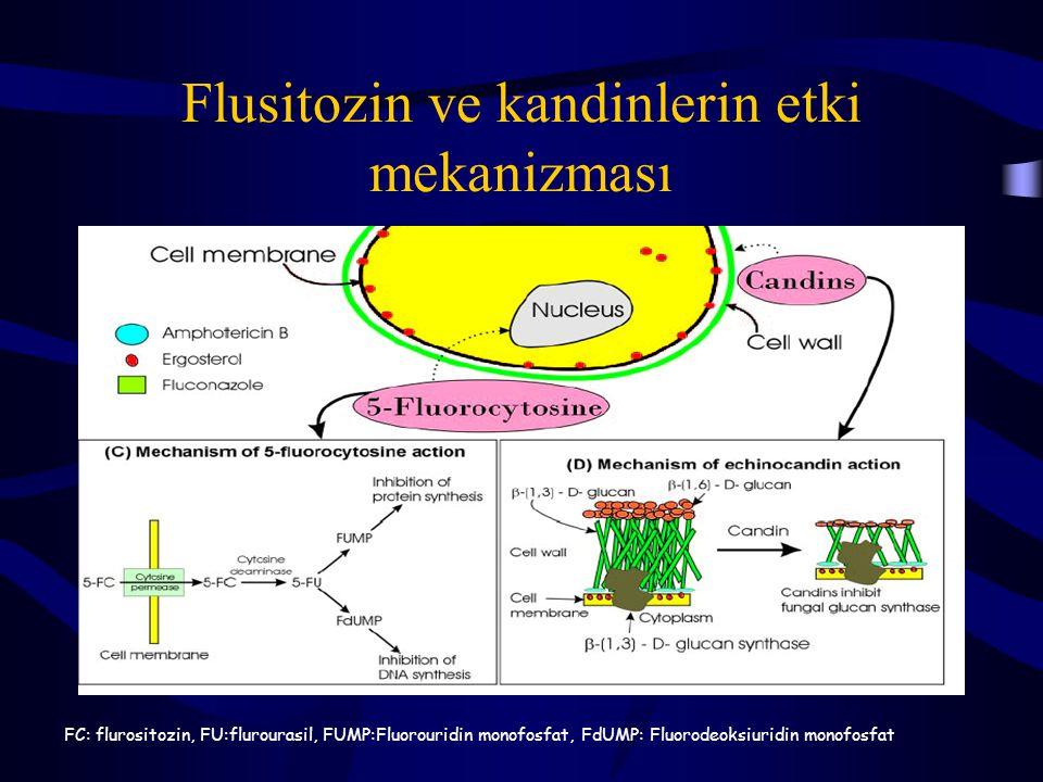 Flusitozin ve kandinlerin etki mekanizması FC: flurositozin, FU:flurourasil, FUMP:Fluorouridin monofosfat, FdUMP: Fluorodeoksiuridin monofosfat