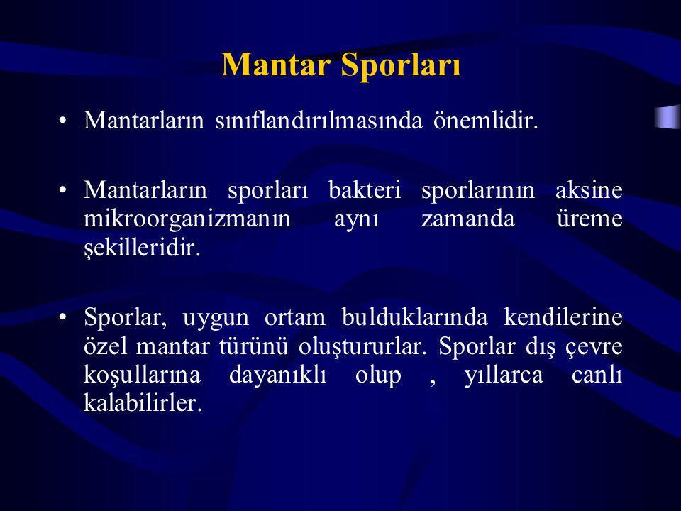 Mantar Sporları Mantarların sınıflandırılmasında önemlidir. Mantarların sporları bakteri sporlarının aksine mikroorganizmanın aynı zamanda üreme şekil
