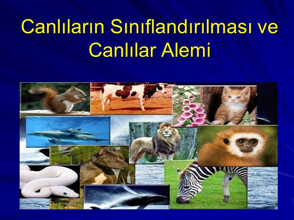 CANLILAR ALEMİ 1 MONERA 2 PROTİSTA 3 FUNGİ (GERÇEK MANTARLAR) 4 BİTKİLER 5 HAYVANLAR PROKARYOTÖKARYOT Canlılar dünyası 5 alemde incelenir :