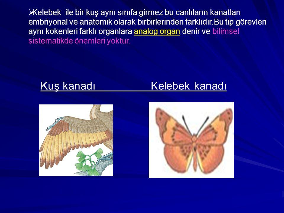   Bir yarasanın kanadı ile bir insanın kolu görevleri bakımından birbirlerine benzemez fakat anatomik yönden organla birbirlerine benzer ve homolog organlar adını alır.