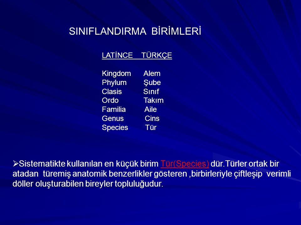 Tür Cins Aile Takım Sınıf Şube Alem Bölüm (Species) (Genus) (Family) (Order) (Class) (Phylum) (Kingdom) (Domain) Sınıflandırma birimlerin de tür den aleme doğru gidildikçe canlı sayısı artar, benzerlikler ise azalır.