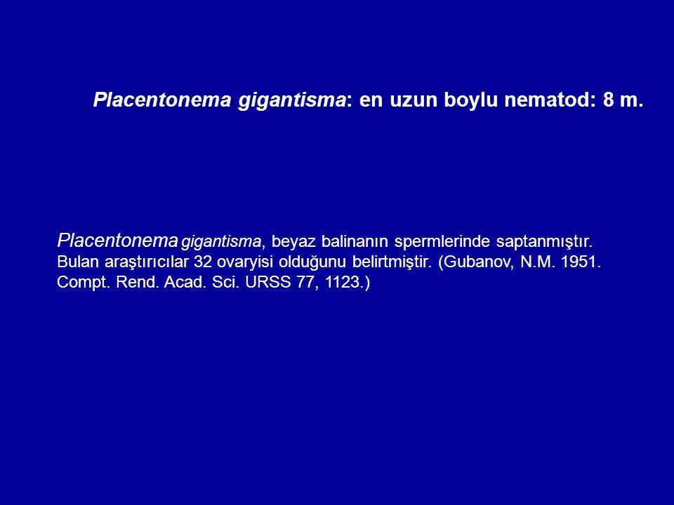 Placentonema gigantisma: en uzun boylu nematod: 8 m. Placentonema gigantisma, beyaz balinanın spermlerinde saptanmıştır. Bulan araştırıcılar 32 ovaryi