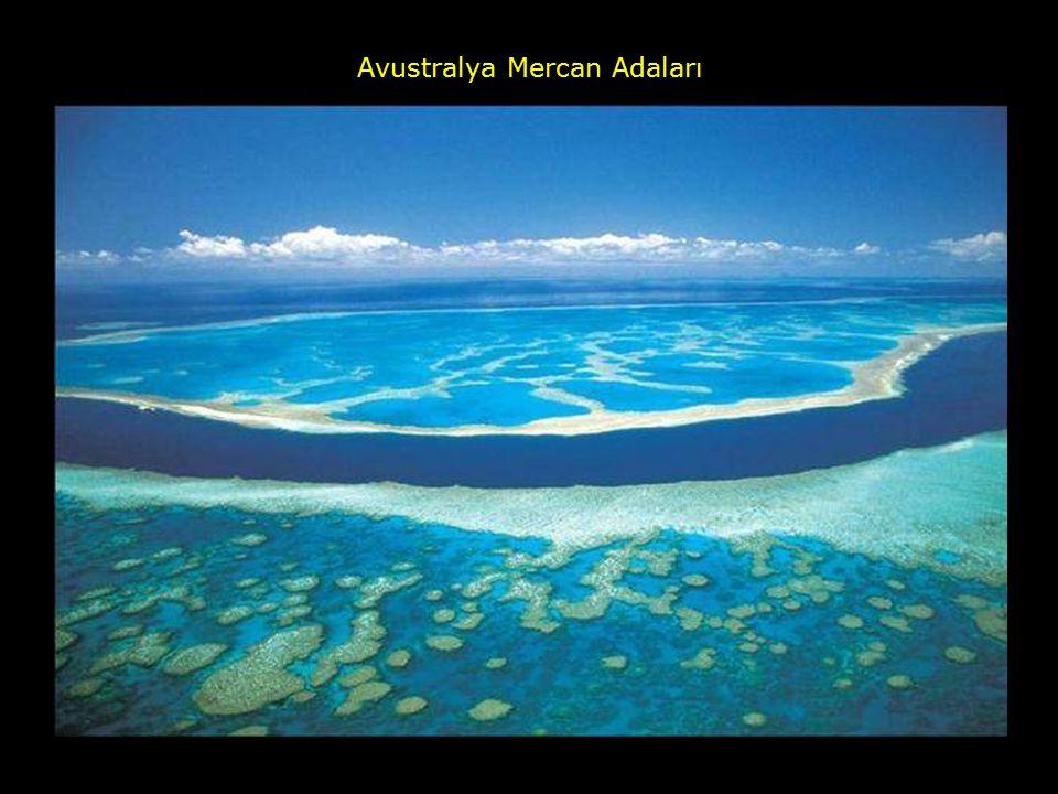 Avustralya Mercan Adaları