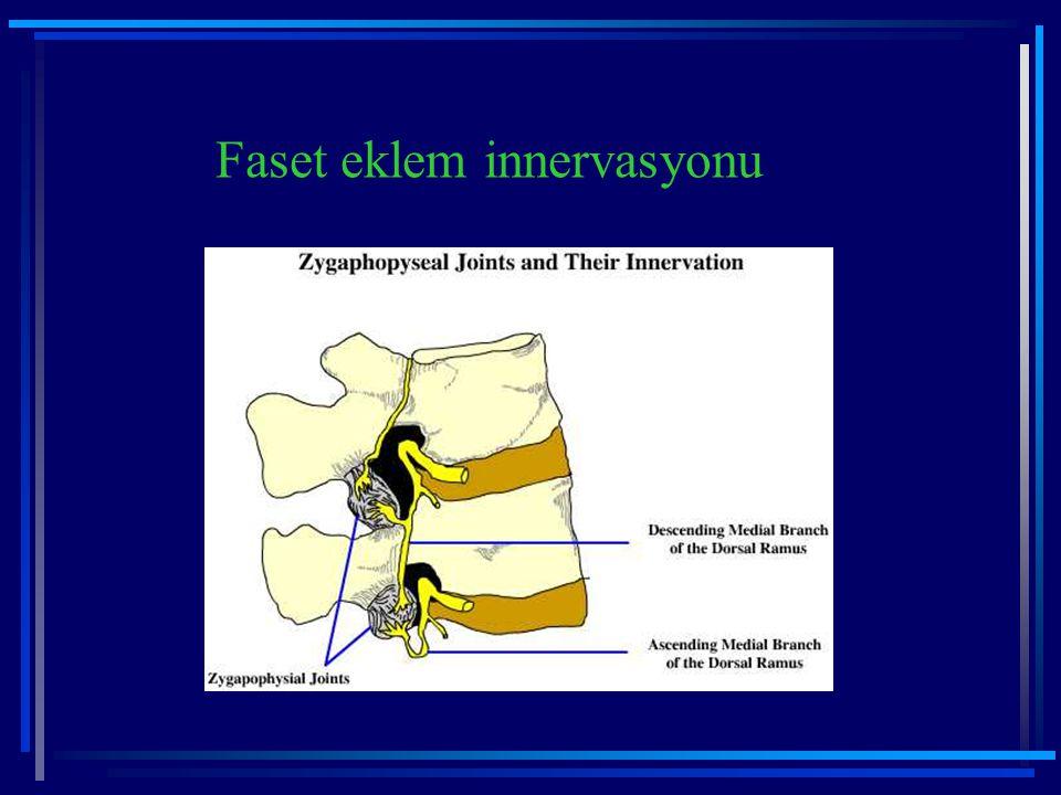Faset eklem innervasyonu
