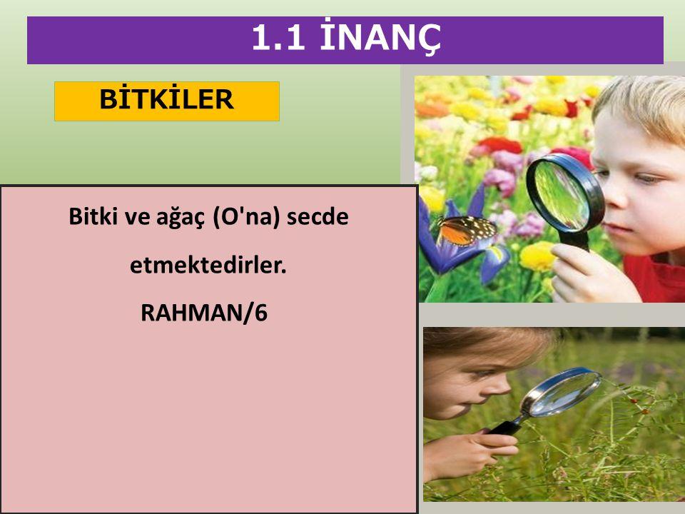 BİTKİLER 1.1 İNANÇ Bitki ve ağaç (O'na) secde etmektedirler. RAHMAN/6