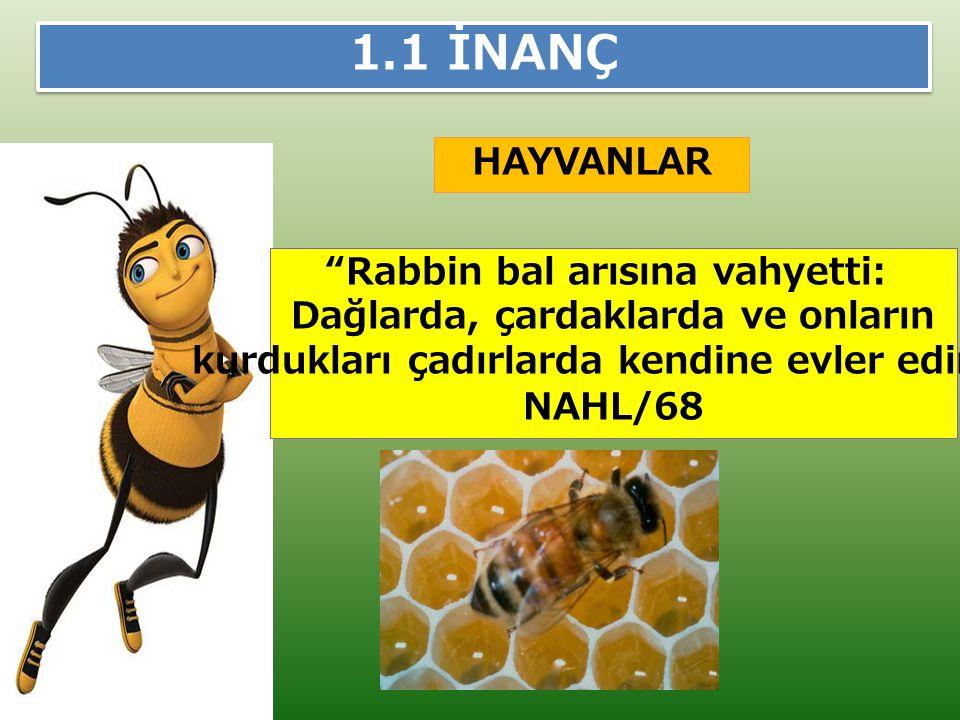 """HAYVANLAR 1.1 İNANÇ """"Rabbin bal arısına vahyetti: Dağlarda, çardaklarda ve onların kurdukları çadırlarda kendine evler edin."""" NAHL/68"""