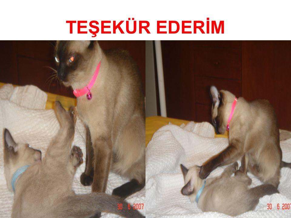 Prof.Dr.Ayşe Avcı Gaziantep 21.03.2008 TEŞEKÜR EDERİM