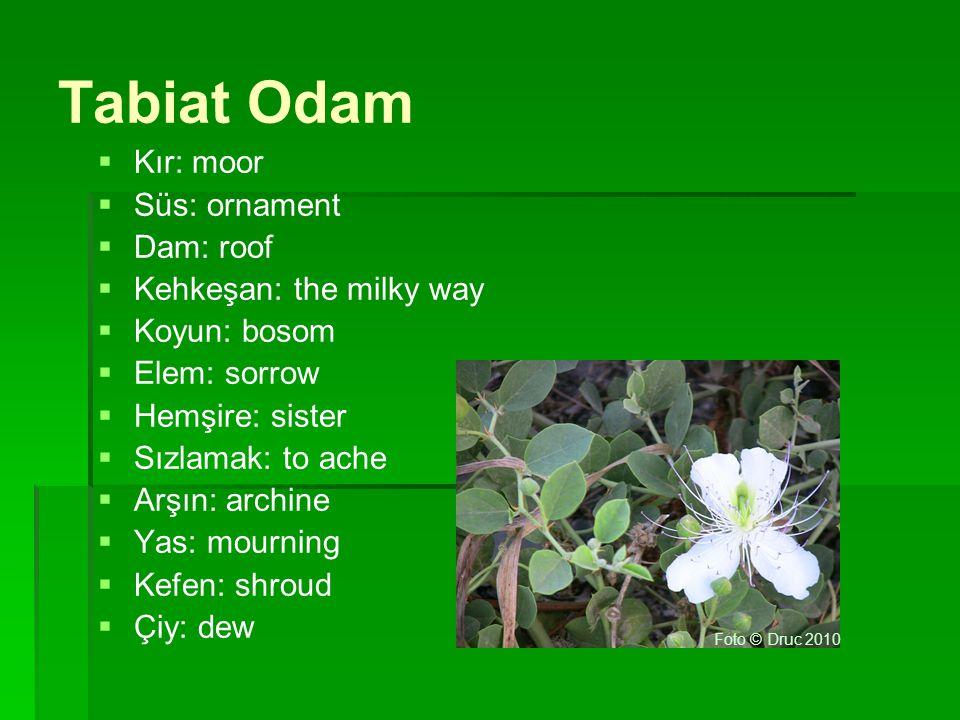 Tabiat Odam   Kır: moor   Süs: ornament   Dam: roof   Kehkeşan: the milky way   Koyun: bosom   Elem: sorrow   Hemşire: sister   Sızlam