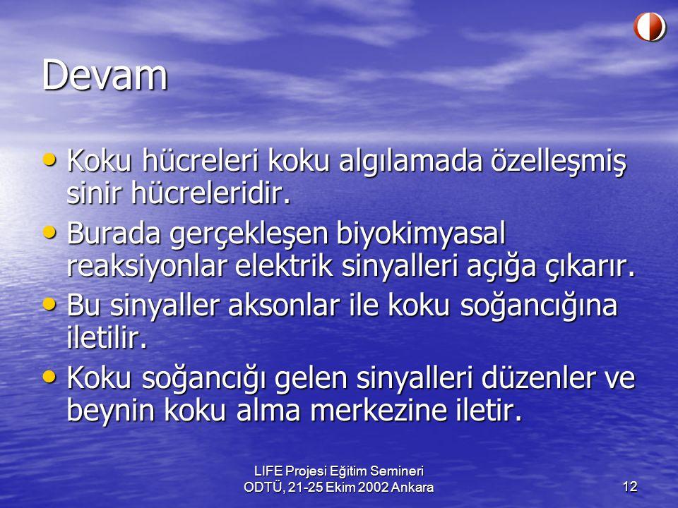 LIFE Projesi Eğitim Semineri ODTÜ, 21-25 Ekim 2002 Ankara12 Devam Koku hücreleri koku algılamada özelleşmiş sinir hücreleridir. Koku hücreleri koku al