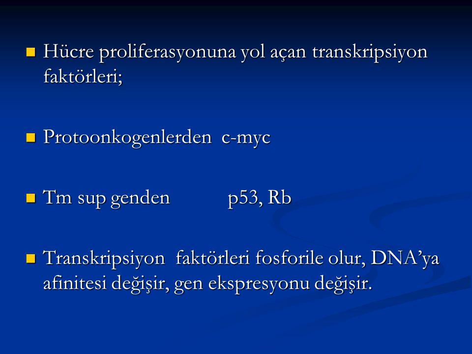 Hücre proliferasyonuna yol açan transkripsiyon faktörleri; Hücre proliferasyonuna yol açan transkripsiyon faktörleri; Protoonkogenlerden c-myc Protoon