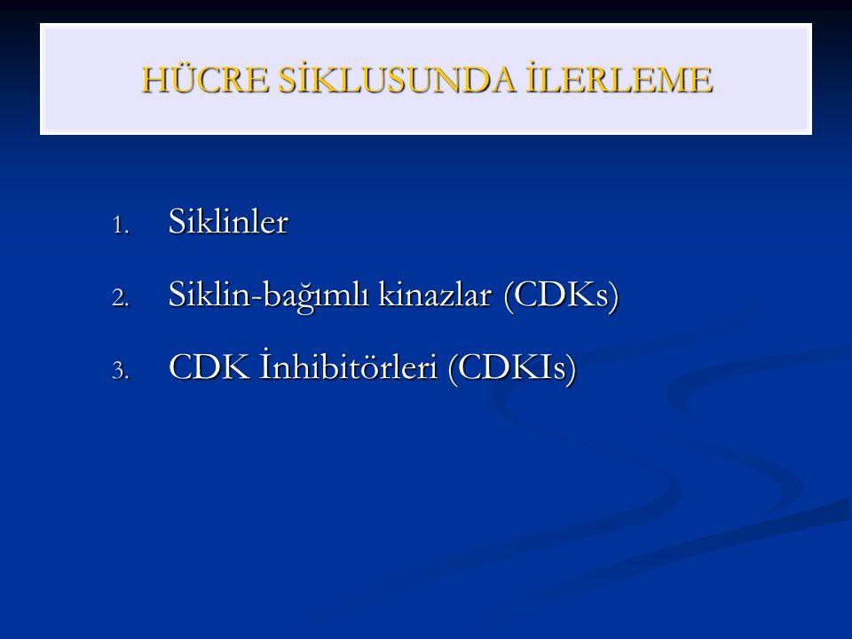 HÜCRE SİKLUSUNDA İLERLEME 1. Siklinler 2. Siklin-bağımlı kinazlar (CDKs) 3. CDK İnhibitörleri (CDKIs)