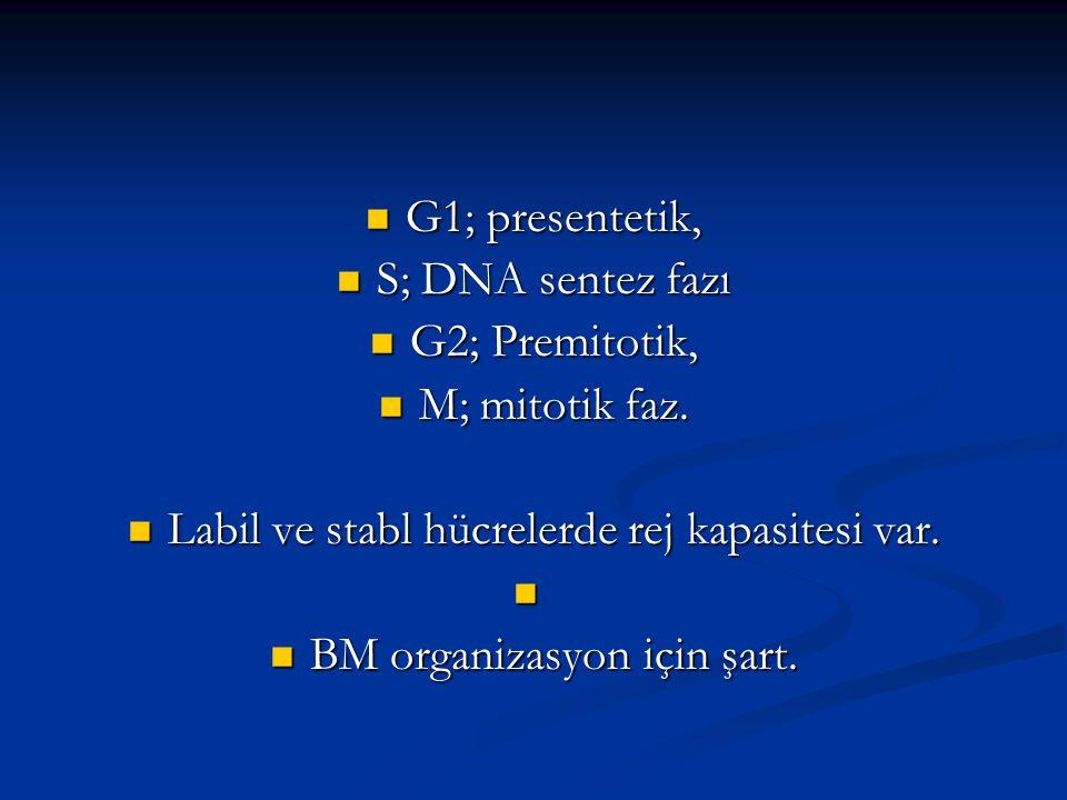G1; presentetik, G1; presentetik, S; DNA sentez fazı S; DNA sentez fazı G2; Premitotik, G2; Premitotik, M; mitotik faz. M; mitotik faz. Labil ve stabl