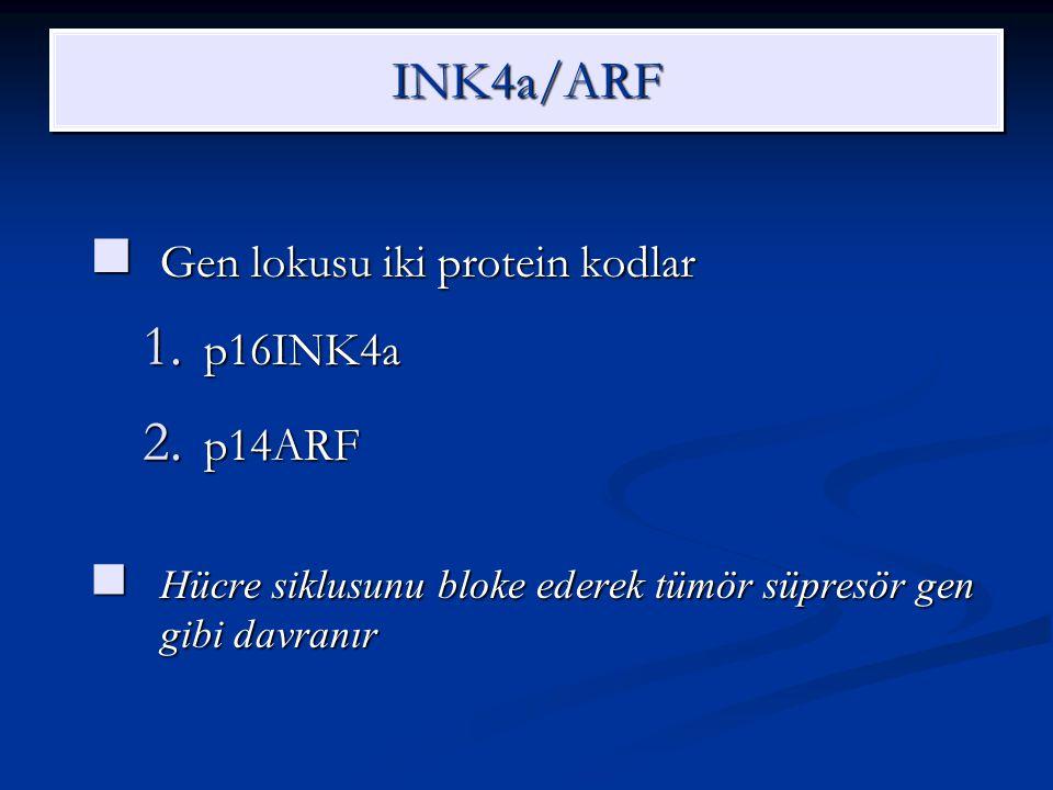 INK4a/ARFINK4a/ARF Gen lokusu iki protein kodlar Gen lokusu iki protein kodlar 1. p16INK4a 2. p14ARF Hücre siklusunu bloke ederek tümör süpresör gen g