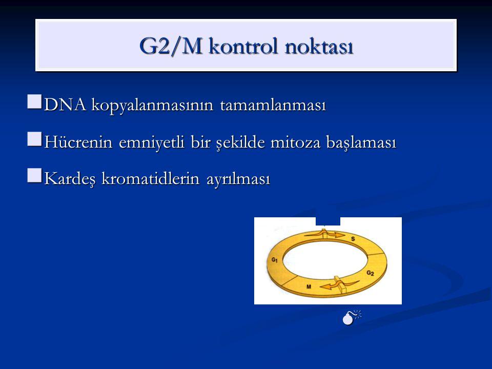 G2/M kontrol noktası DNA kopyalanmasının tamamlanması DNA kopyalanmasının tamamlanması Hücrenin emniyetli bir şekilde mitoza başlaması Hücrenin emniye