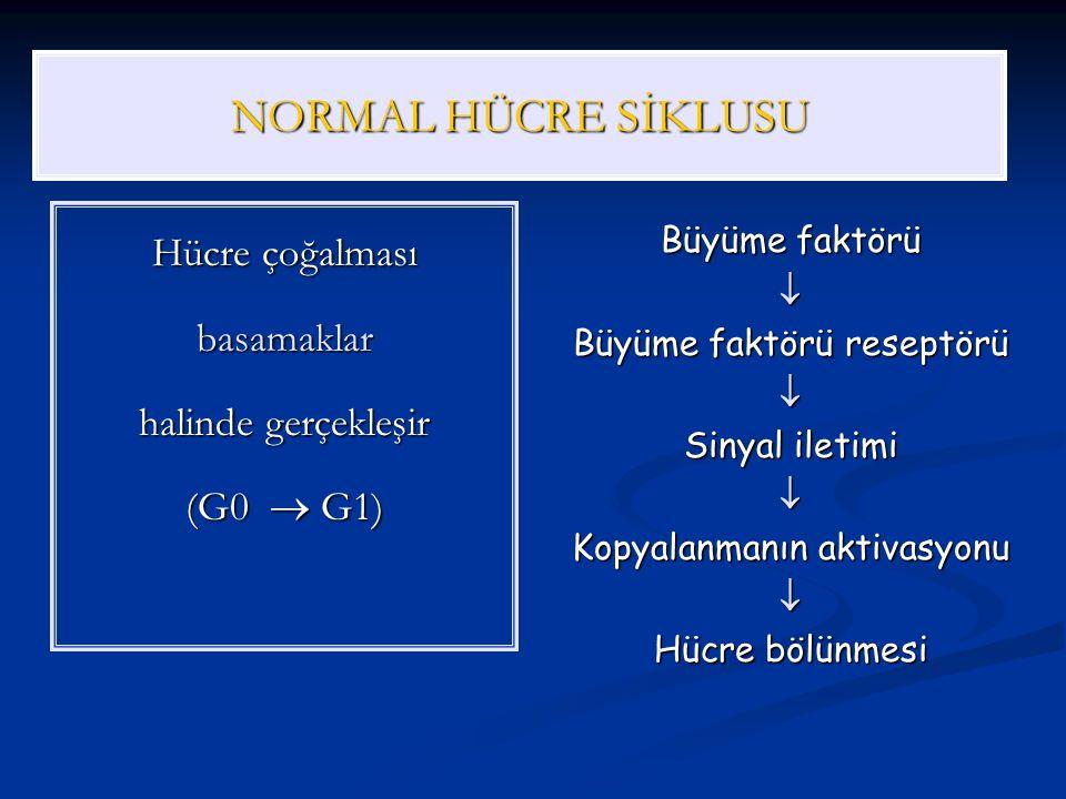 SİKLİNLER Hücre siklusunun spesifik fazlarında sentezlenir Sırasıyla D, E, A, B ortaya çıkar