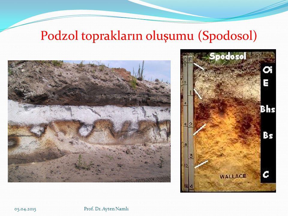 Podzol toprakların oluşumu (Spodosol) 05.04.2015Prof. Dr. Ayten Namlı