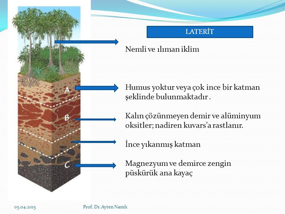 Nemli ve ılıman iklim Humus yoktur veya çok ince bir katman şeklinde bulunmaktadır. Kalın çözünmeyen demir ve alüminyum oksitler; nadiren kuvars'a ras