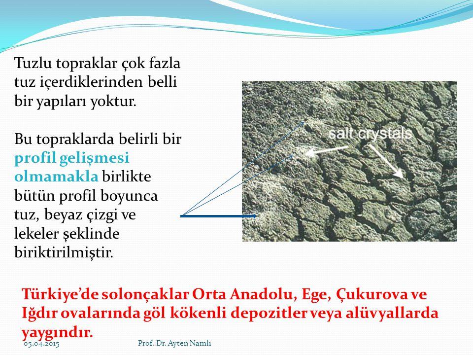 Tuzlu topraklar çok fazla tuz içerdiklerinden belli bir yapıları yoktur. Bu topraklarda belirli bir profil gelişmesi olmamakla birlikte bütün profil b
