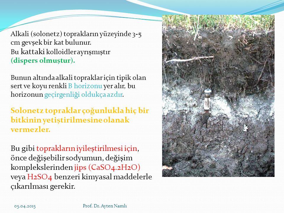 Alkali (solonetz) toprakların yüzeyinde 3-5 cm gevşek bir kat bulunur. Bu kattaki kolloidler ayrışmıştır (dispers olmuştur). Bunun altında alkali topr