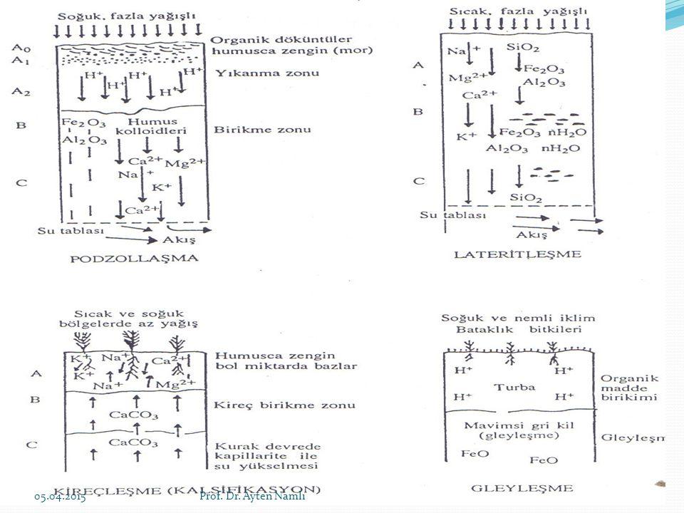 Mineral A horizonuna geçen sızıntı suları önce Ca, Mg, K ve Na gibi bazları topraktan hızla yıkayarak profilden uzaklaştırır.