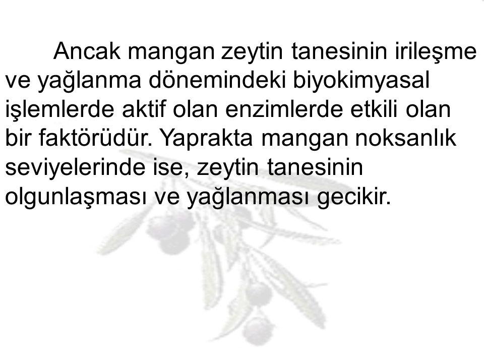 Mangan: Mangan noksanlığı zeytin ağaçlarında semptomolojik olarak görülmez.