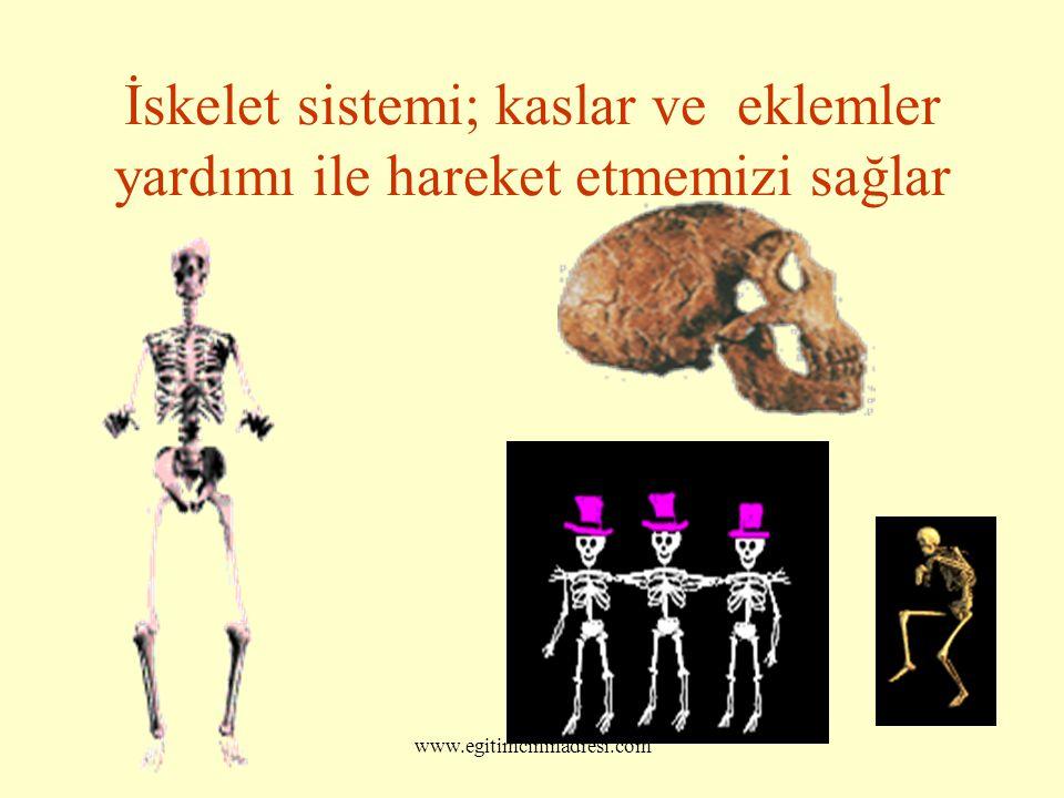 İskelet sistemi; kaslar ve eklemler yardımı ile hareket etmemizi sağlar www.egitimcininadresi.com